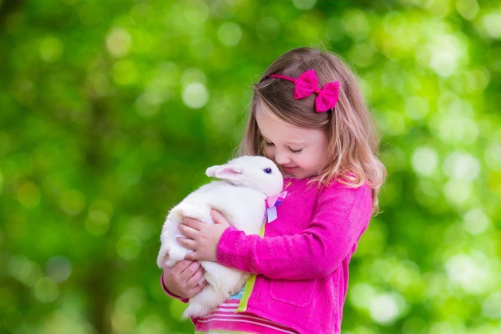 A little girl holding a large white rabbit