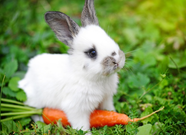rabbit veterinarian in longwood fl