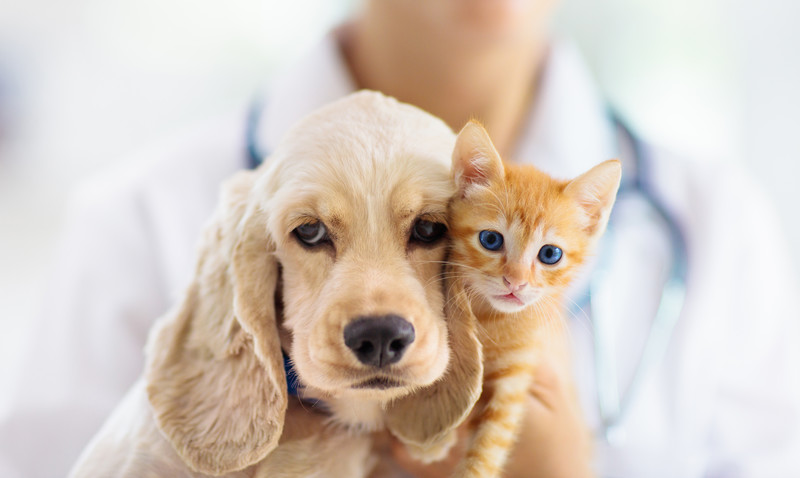 Cat & Dog Vaccinations in Longwood, FL