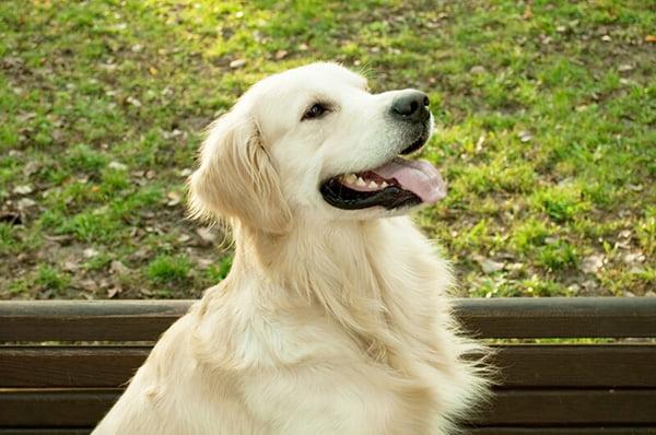 Dog breeding in Longwood